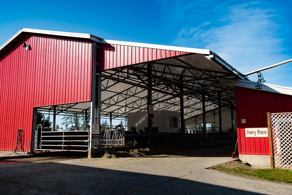 Milking Parlour: Morningstar Farm | Little Qualicum Cheeseworks