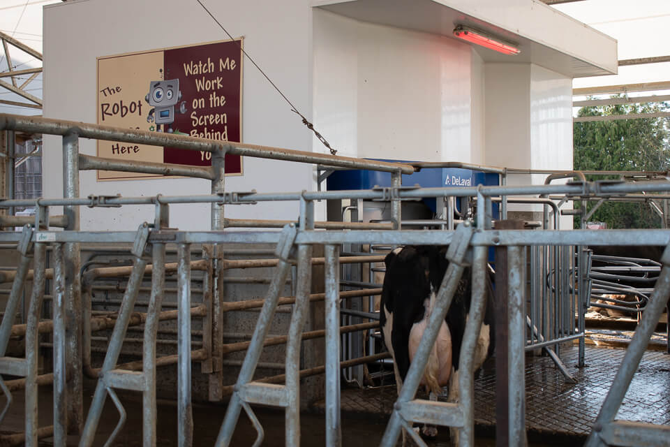 Milking Robot: Morningstar Farm | Little Qualicum Cheeseworks